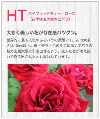 HTハイブリッドティー・ローズ(四季咲き大輪木立バラ)
