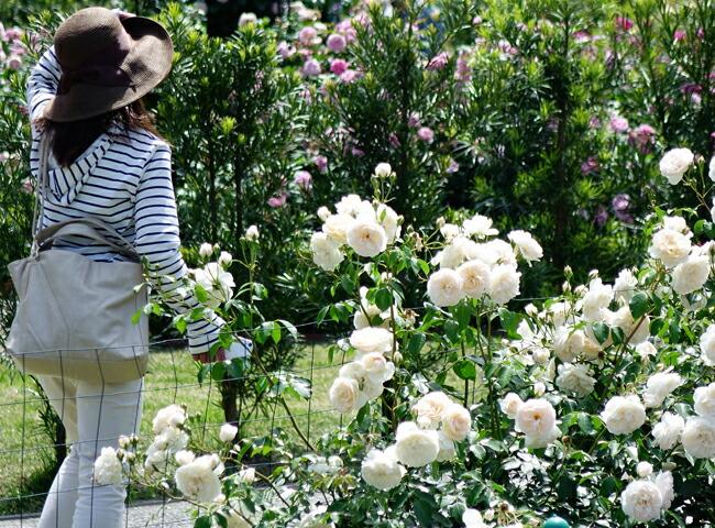 果樹、バラ、植木、庭木など3000種類以上あります!