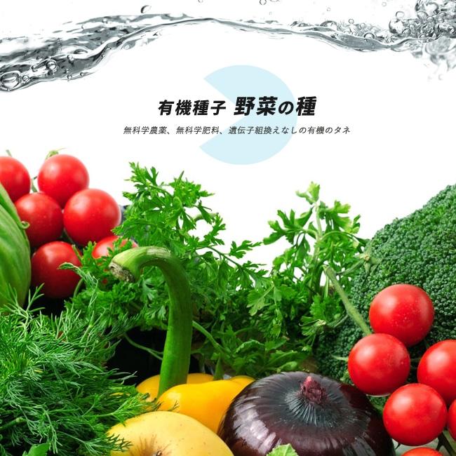 野菜の種 (タネ)