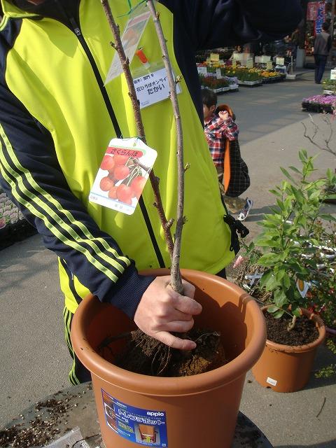 苗木を植えます