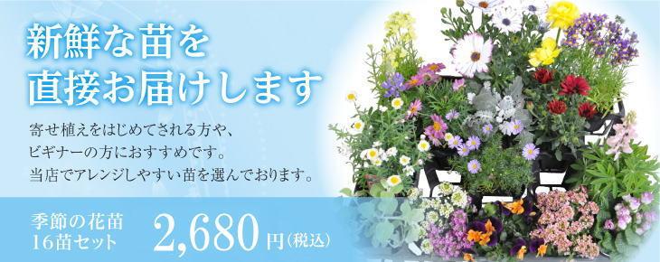 季節の花苗 16苗セット