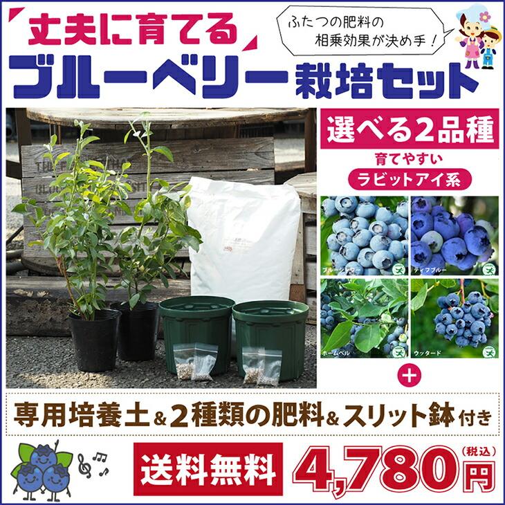 ブルーベリー栽培セット