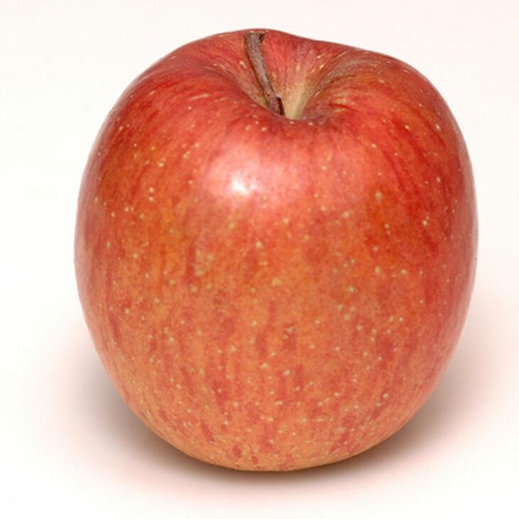 リンゴ 【陸奥 1年生接木苗 】