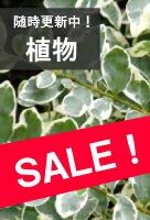 植物SALE