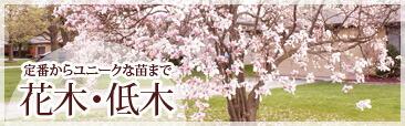 花木・低木