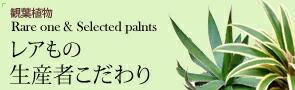 観葉植物 レアもの・生産者のこだわり