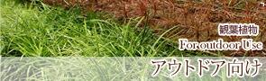 観葉植物 アウトドア観葉