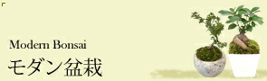 観葉植物 モダン盆栽