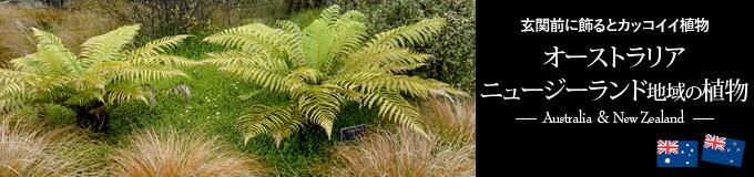 オーストラリア・ニュージーランド地域の植物