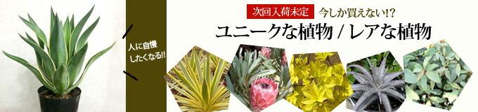 【珍しい・ユニークな植物】