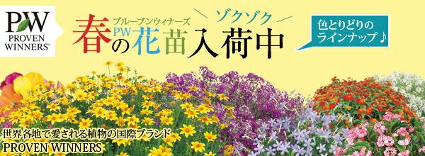 春のPW花苗