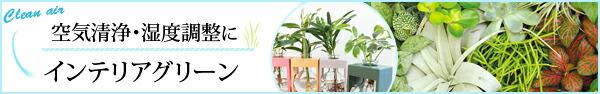 空気清浄、湿度調整にインテリアグリーン