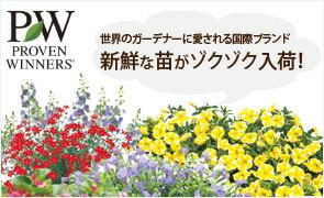 国際ブランドPWの植物