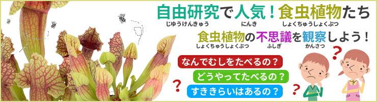 夏休みの研究・観察に!食虫植物