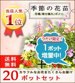 季節の花苗セット