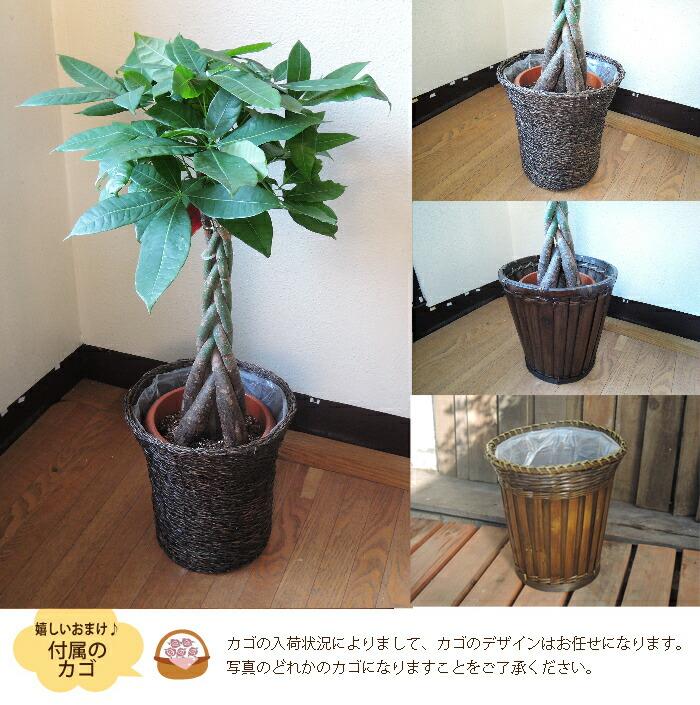 3syu_kago_paki0.jpg