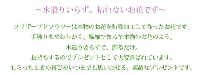 keirou_pu06.jpg