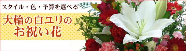 大輪系白ユリを使ったお祝い花