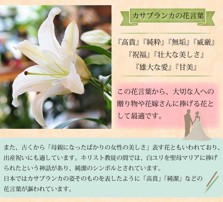 カサブランカの花言葉は、高貴・純粋・無垢・威厳・祝福・壮大な美しさ・雄大な愛・甘美