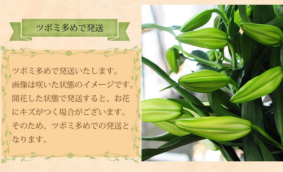 日本ではカサブランカの姿そのものを表したように、高貴・純潔などの花言葉が謳われています。