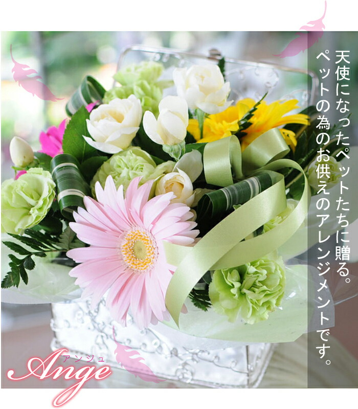 ange_cap.jpg