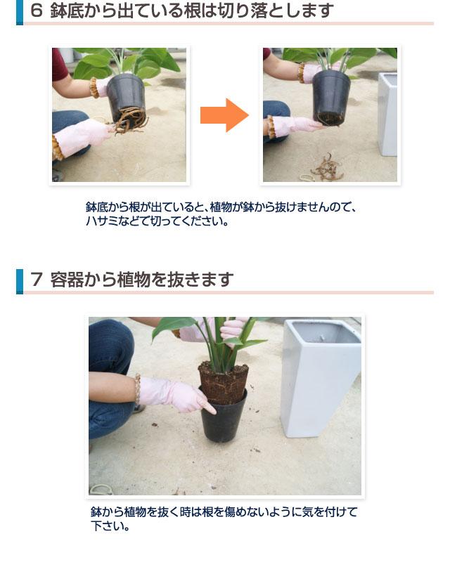 植え替え(4)