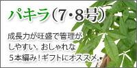 パキラ【7・8号】