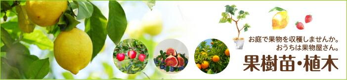 果樹苗・植木