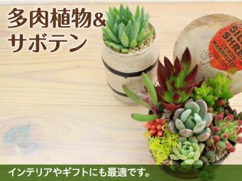 多肉植物&サボテン