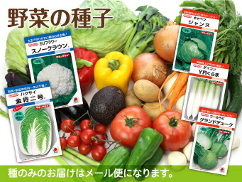 野菜の種子