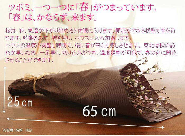 サクラ花束