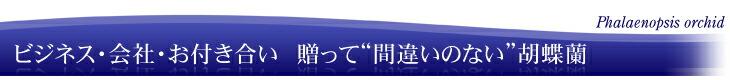"""ビジネス・会社・お付き合い 贈って""""間違いのない""""胡蝶蘭"""