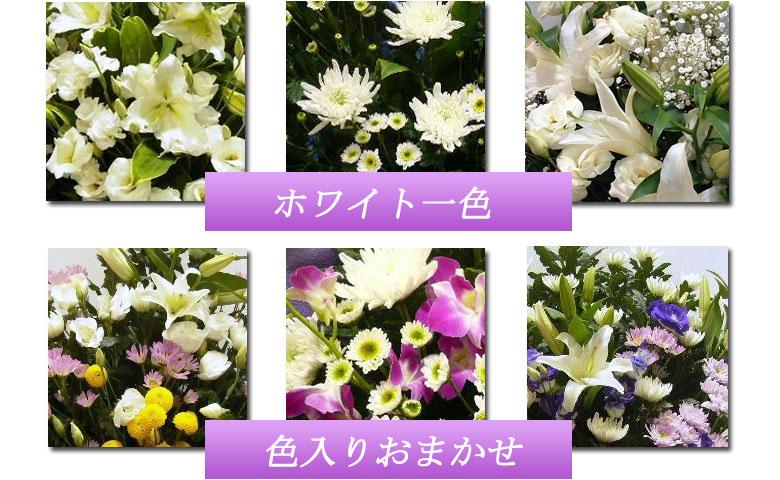 お花の色は白一色、紫やピンクなどの色入りおまかせから選べます