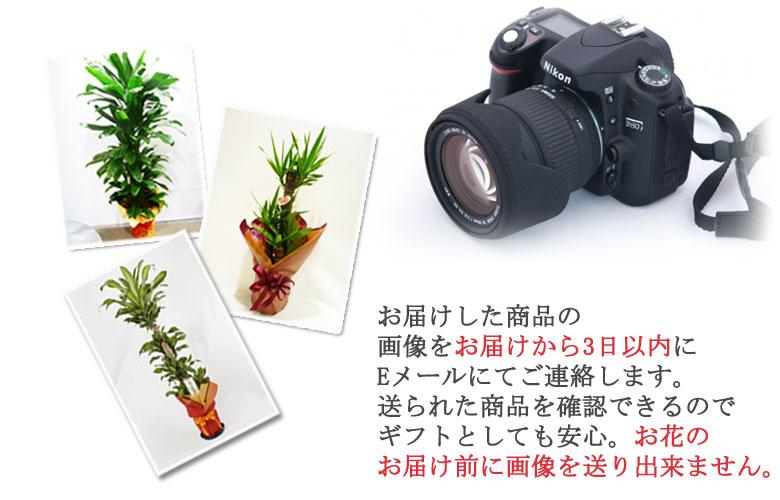 画像送信サービス実際にお届けしたお花の写真をお届けから3日以内にEメールでお知らせします。 ご希望の方は、購入ページで画像送信希望をお選びください。
