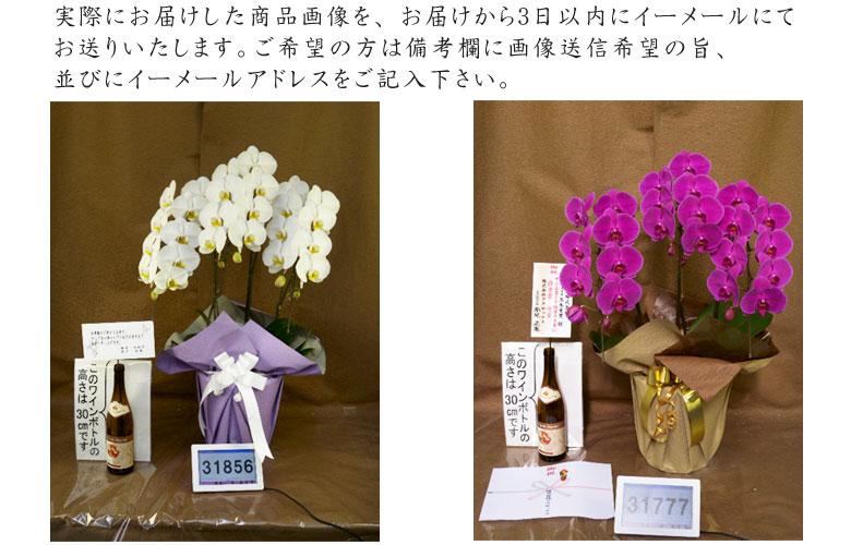 実際にお届けしたお花の写真をお届けから3日以内にEメールでお知らせします。 ご希望の方は、購入ページで画像送信希望をお選びください。
