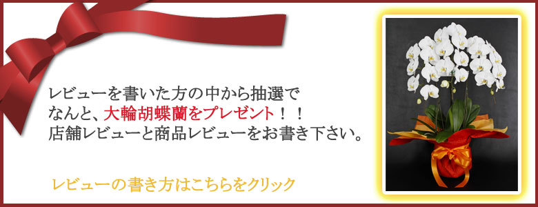 レビューを書いた方に抽選で胡蝶蘭をプレゼント!! 店舗並びに商品ページにお書きください。その際に、受注番号をご記入ください。
