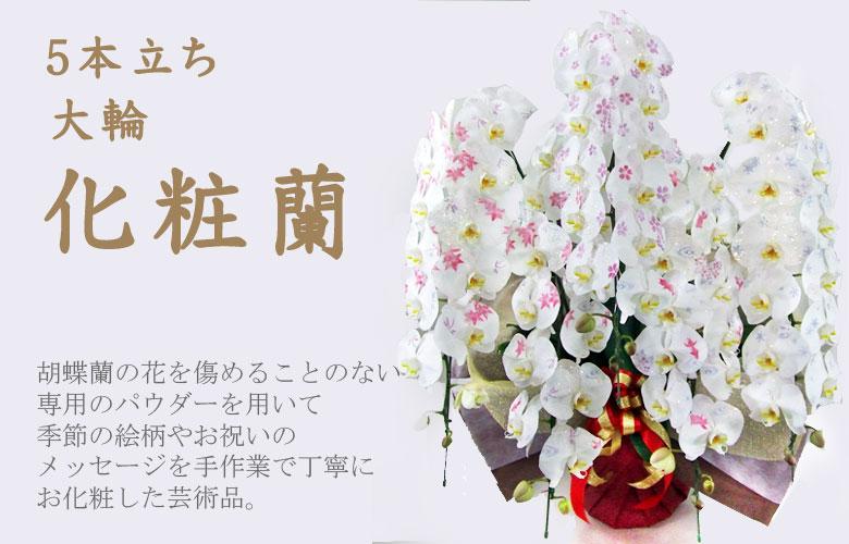 5本立ち化粧蘭 化粧欄とは、最高級の胡蝶蘭に専用のパウダーで一本づつ手作業で文字や模様の「お化粧」を施した胡蝶蘭のことです。