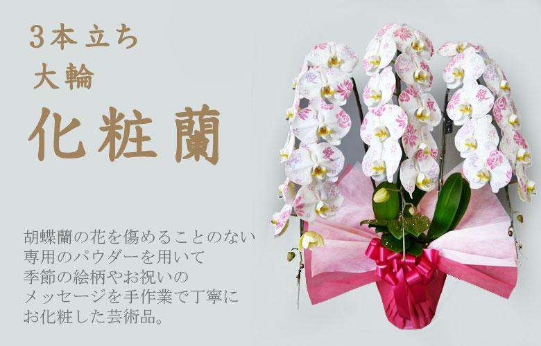 3本立ち化粧蘭 化粧欄とは、最高級の胡蝶蘭に専用のパウダーで一本づつ手作業で文字や模様の「お化粧」を施した胡蝶蘭のことです。