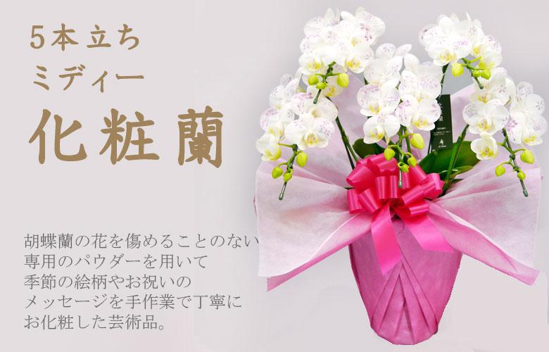 5本立ちミディー化粧蘭 化粧欄とは、最高級の胡蝶蘭に専用のパウダーで一本づつ手作業で文字や模様の「お化粧」を施した胡蝶蘭のことです。
