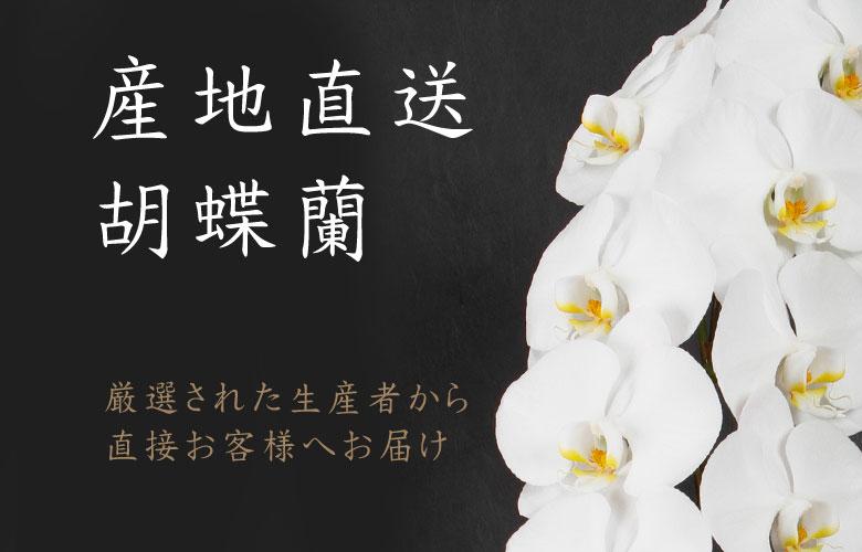 厳選された生産者の胡蝶蘭を産地直送でお届け!