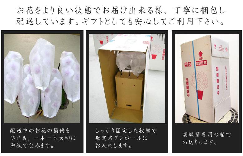 花専用の箱使用 ギフト対応