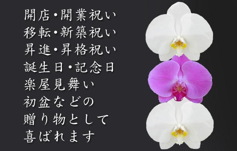 厳選されたお花屋さんから手渡しでお花をお届けします。