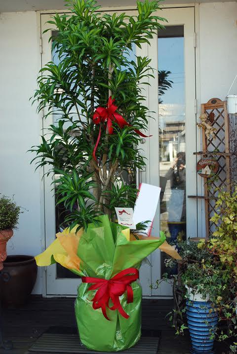 観葉植物 開業祝い