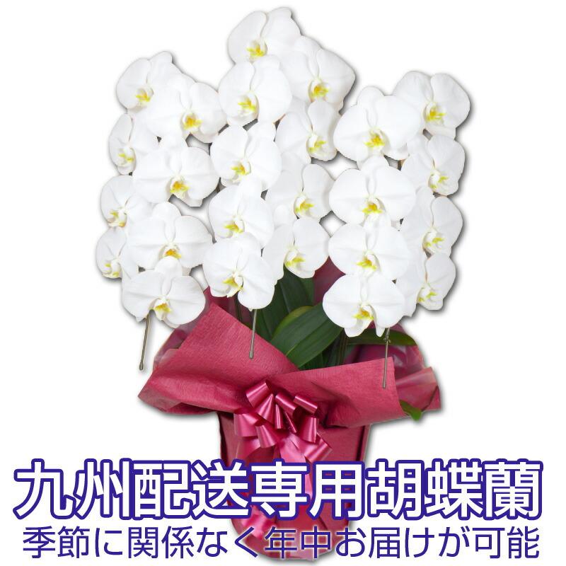 九州配送胡蝶蘭