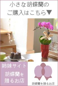 胡蝶蘭を贈るお店