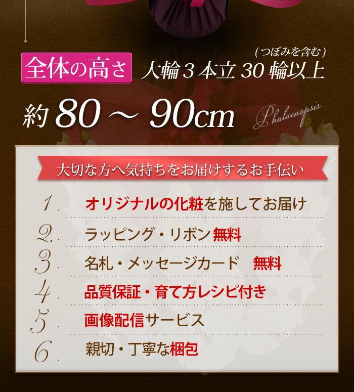 rlsa102hito_02.jpg