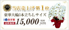 当店売上げランキング第1位 大輪5本立ち27輪以上保証 送料無料15,000円