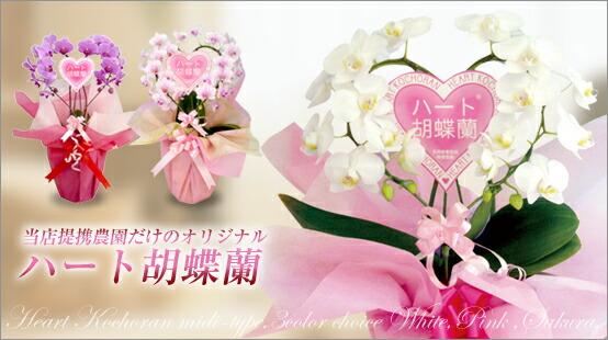 ハート胡蝶蘭