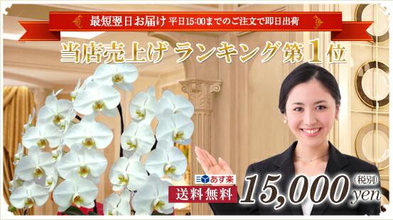 楽天ランキング常時入賞の高品質胡蝶蘭をお届けいたします。 当店売上ランキング第1位 送料無料15,000円