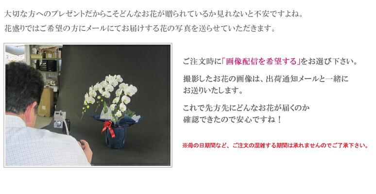 お届けする胡蝶蘭の写真をメールでお送りします